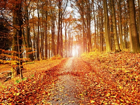 Path leading among the beech trees in early autumn forest. Fresh colors of leaves, yelllow green leaves on trees shinning in afternoon sun. Stock Photo