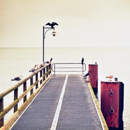 Empty pier in harbor. Steel grate board. Black cormorant sit on lamps. Autumn mist on pier above sea. Depression, dark atmosphere. Stock Photo