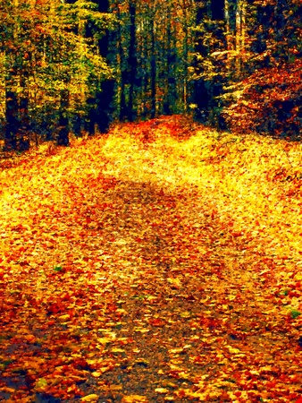 yelllow: Watercolor paint effect. Path leading among the beech trees in early autumn forest. Fresh colors of leaves, yelllow green leaves Stock Photo
