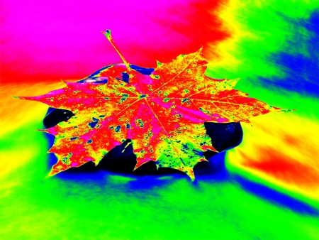 thermography: Ultraviolet  scan. Infrared  photo. The colorful broken leaf from maple tree on basalt stones in blurred water of mountain river Stock Photo