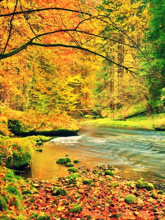Autumn landscape, colorful leaves on trees, morning at river after rain. Fall season. Colorful leaves.  Forest river. Fall morning river. Autumnal nature.