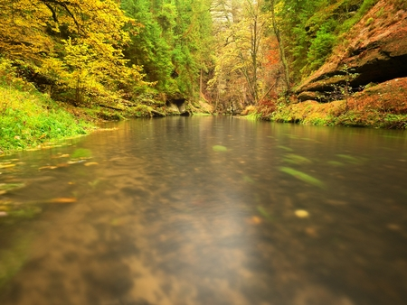 beck: Colorful autumn Beeches and aspen leaves in fall on boulder mountain stream. Cold Water blurred by long exposure, blue reflection in water level.