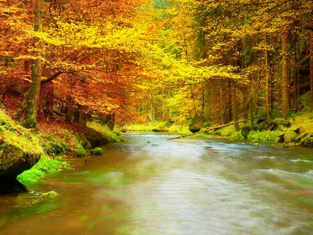 Autumn river. Colorful forest above mountain river. Water under leaves trees. Low level with yellow orange  reflection.  Green mossy boulder in stream.