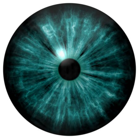 Illustration of human green eye, light reflection. Middle size of open eyes.