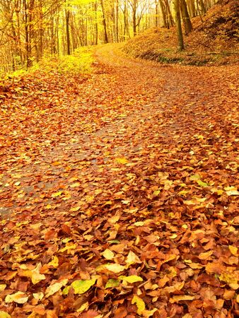 Autum in nature. Colorful autumnal landscape with deciduous forest and many fallen leaves