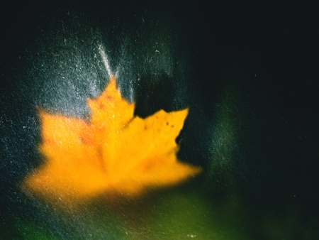 The maple leaf in shinning drops of mountain stream. Drops lightpainting. Detail of rotten yellow maple  leaf lay on dark stone in blurred mirror water of mountain river. First autumn leaves.