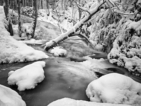 glen: Frozen cascade of waterfall, icy twigs and icy boulders in frozen foam of rapid stream. Winter creek. Extreme freeze.