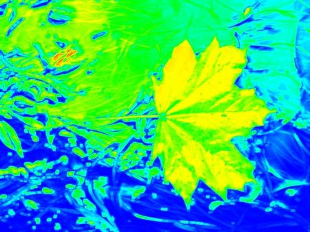 gamma radiation: Infrared scan of leaves in river. Maple and  oak leaves on stream water level. Thermo vision changed colors. Temperature measurement.