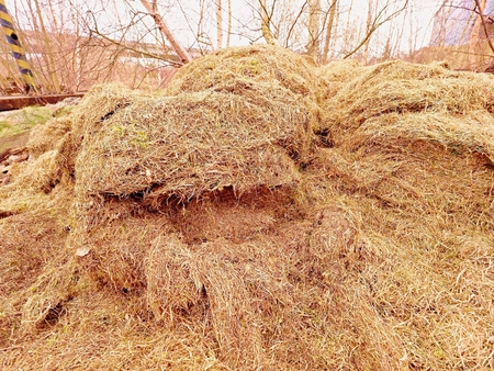 Decay harvested grass in big green mound in corner of garden.  Terrible smell Bio trash, grass mound. Фото со стока