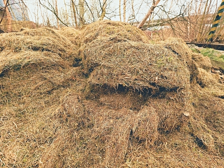 moulder: Terrible smell rotten grass. Decay harvested grass in a large green mound in the corner of a garden.