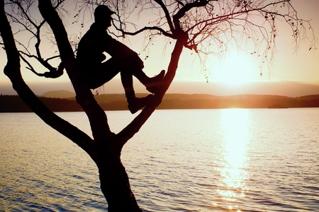 melancholy: Man sit on tree. Silhouette of  lone boy with baseball cap  on branch of birch tree  in front of the sunset at shoreline.