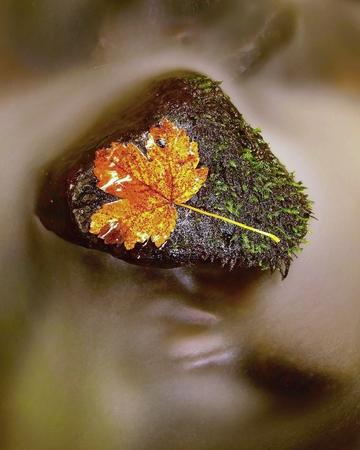 Rotten autumn leaf on slippery stone in stream
