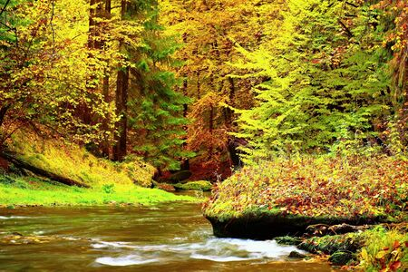 Colors of autumn mountain river. Colorful banks with leaves, leaves trees bended above river. Stock Photo