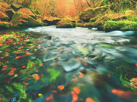 Fall in nature. Colors of autumn mountain river. Colorful gravel with leaves, leaves trees bended above river. Stock Photo