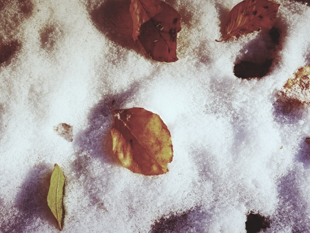 road autumnal: First snow on colorful leaves. Autumnal nature.  Road in autumn forest Stock Photo