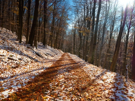 winter road: Snowy path leading among the beech trees in early winter forest. Fresh powder snow with colors of leaves, yellow green leaves on trees shinning in afternoon sun Stock Photo