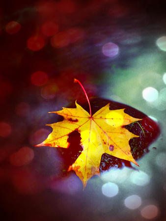 bubble level: Film grain effect. Autumn colors. Fallen maple leaf on slippery basalt stone in smoky water. Cold water of  mountain stream cascade Stock Photo
