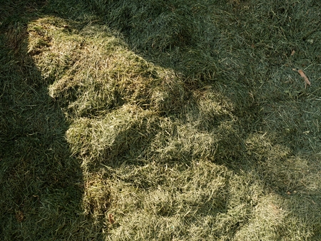 Terrible smell rotten grass. Decay harvested grass in green mound in corner of garden.