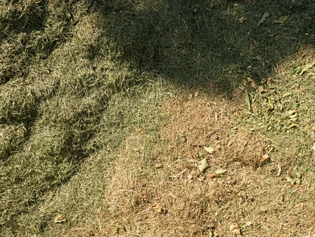 Decay harvested grass in big green smell mound in corner of garden.  Lactic fermentation of fresh cut grass