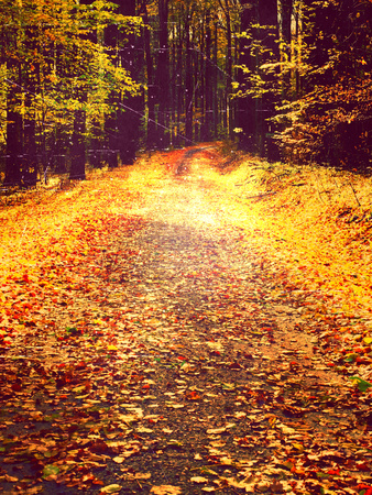 Film grain effect. Path leading among the beech trees in early autumn forest. Fresh colors of leaves, yelllow green leaves