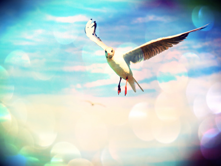 Film grain effect. Sea gull in blue sky. Wild seagull bird flies and looking into camera. Blue sky over the sea. Stock Photo
