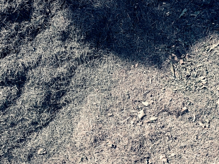 moulder: Terrible smell rotten grass. Decay harvested grass in a green mound in the corner of a garden. Stock Photo