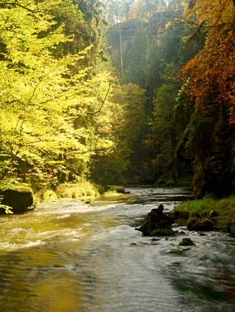 Autumn landscape, colorful leaves on trees, morning at river after rainy night. Colorful leaves. Autumn stream. Forest river. November scene.Fall morning river. Colors of river. Nature in autumn. Stock Photo
