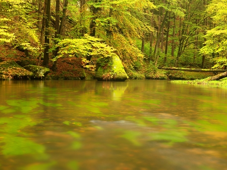 Autumn forest. Water under leaves trees. Low level with yellow orange reflection.