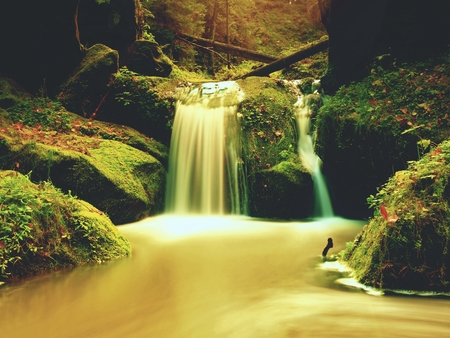 Weir in mountain stream. Colorful leaves  on stones into water. Dark green mossy boulders.