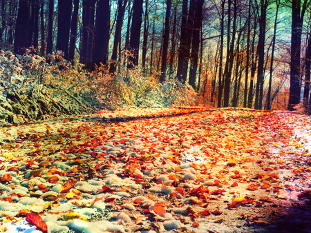 Flare, soft focus. Forest Road in the autumn. Autumn Landscape. Fresh colors of leaves, yellow green leaves on trees shinning in afternoon sun.