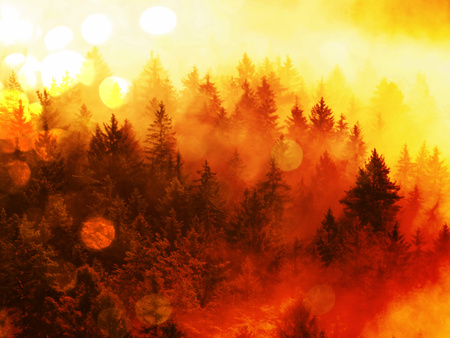 inversion: Flare, soft focus. Firing forest in the rain. Treetops increased from smoke and stripping inversion.