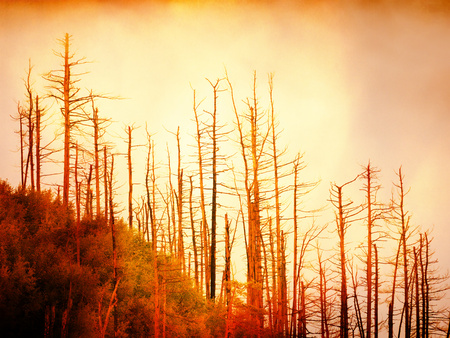 Flare, soft focus. Firing forest in the rain. Treetops increased from smoke and stripping inversion.