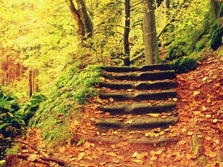 Stony steps in forest, tourist footpath. Bellow golden trunks curved sandstone  stairs in golden autumn forest