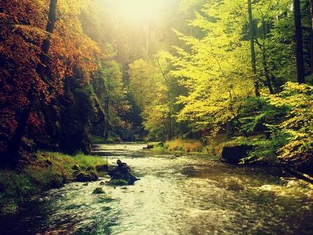 Herfstbos. Water onder bladeren bomen. Laag niveau met geel oranje reflectie. Stockfoto
