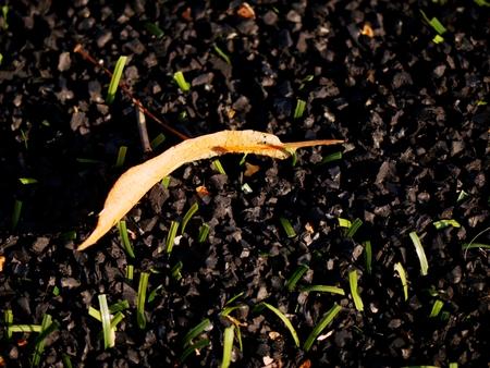 pasto sintetico: Caucho crudo de Winter Soccer Turf. Vista de cerca del campo de césped artificial en el patio de fútbol. Piezas de plástico, hojas, hierba y caucho negro finamente molido.
