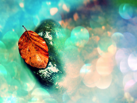 Flare, soft focus. Autumn orange colors in water. Death beech  leaf is laying on wet stone in cold mountain stream. Stones and colorful autumn leaves. Stock Photo