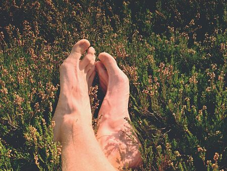 Male legs on dry heather bush. Tired legs on rocky peak bove landscape. Pure pink skin, clear nails. Heather twigs with gentle pink violet blossoms.