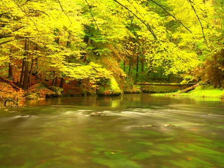 Autumnal nature. Beautiful autumn forest with mountain river and colorful trees with green red yellow and orange leaves. Mountain forest Stock Photo