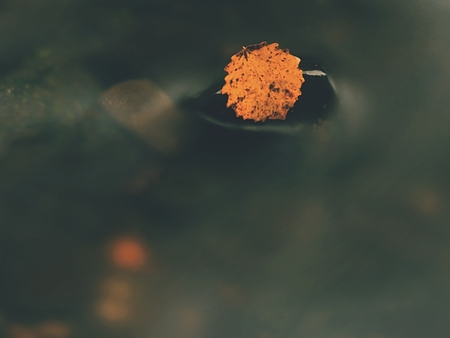 Autumn colorful leaf. Nice yellow broken leaf on basalt stone in blurred water of mountain stream cascade.