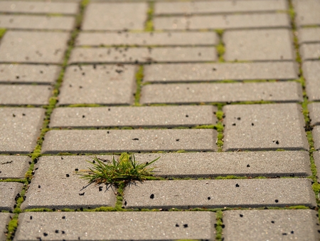 Cobblestone paving footpath with a bunch of grass,  concrete cobbles. Texture of old stone path with green grass Stock Photo