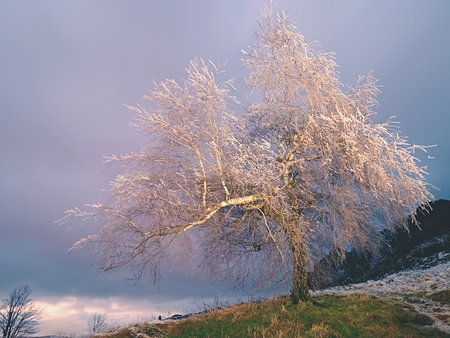 Hoarfrost covered trees branches with icy blades. Freeze dark night in background. First chilly night. Stock Photo