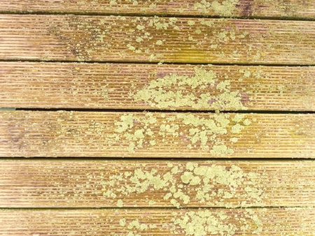 The surface of the hardwood floor treated with a fungicidal and insecticidal sealer. Places with lichen, the core wood not affected. Stock Photo