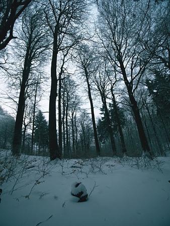 dark winter forest on hill tree at the mountain peak ground