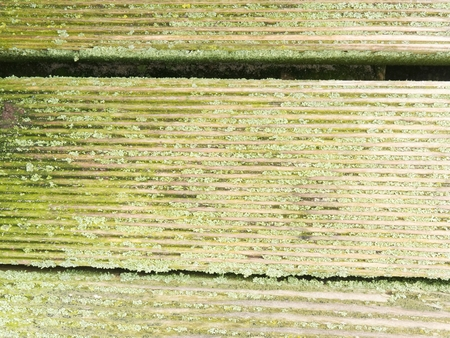 Natural barn wood floor with green moss or lichen cover. Hard wood planks or boards with a rustic look and mossy overgrown.