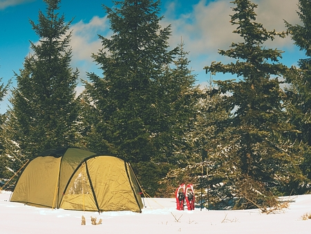 Camping during winter hiking in the mountains. Green tourist tent under spruces.