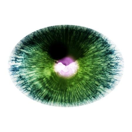 X-ray picture of animal eye. Shinning iris around pupil detail view into eye bulb Stock Photo