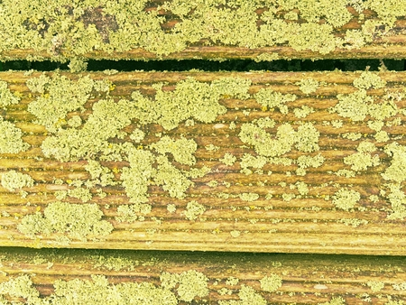 Old wooden background paintedyellow  green paint with cracks