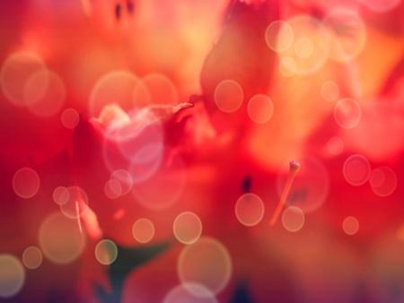 Lovely azalea pink in flower bed garden. Flowering branch of rhododendron in the spring garden.  Hipster filter.