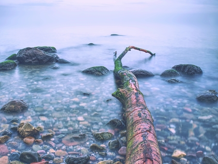 Coast of the sea after a storm. Romantic atmosphere colorful sunset at sea.  Blue sky above sea water level. Lonely fallen tree on empty stony coastline. Stock Photo