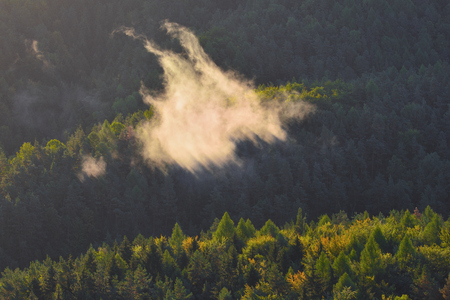 Forested mountain in low lying valley fog with silhouettes of evergreen conifers shrouded in mist. Stock Photo